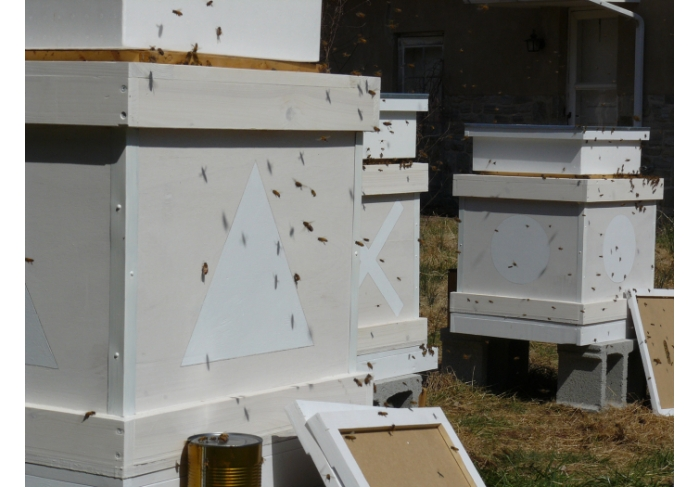 Daniel Lefcourt Programmed Hives (works in progress)